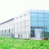 阳光板温室 供应阳光板温室